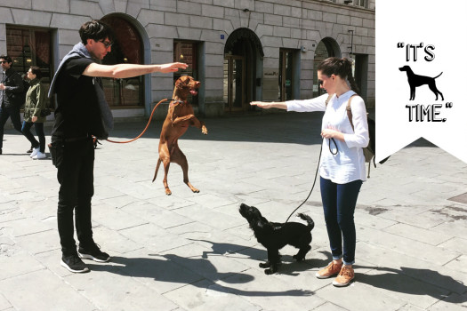 City strolling. </br>With your dog!
