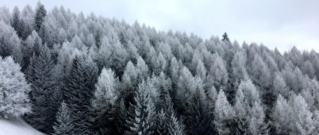 Frosty, foggy, sunny.