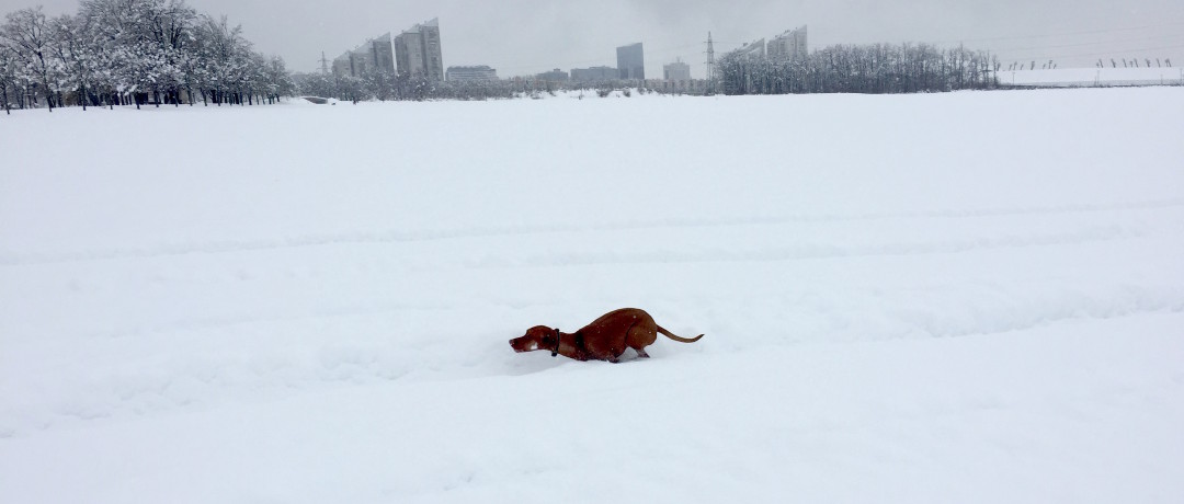 New snow.